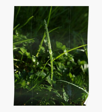 Dew Drops in the Gras VRS2 Poster