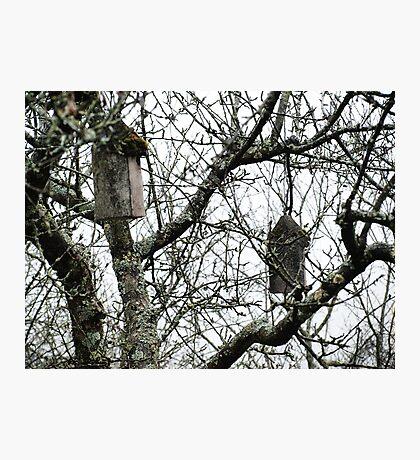 Hanging Bird Houses VRS2 Photographic Print
