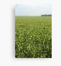 Riverina Wheat Canvas Print