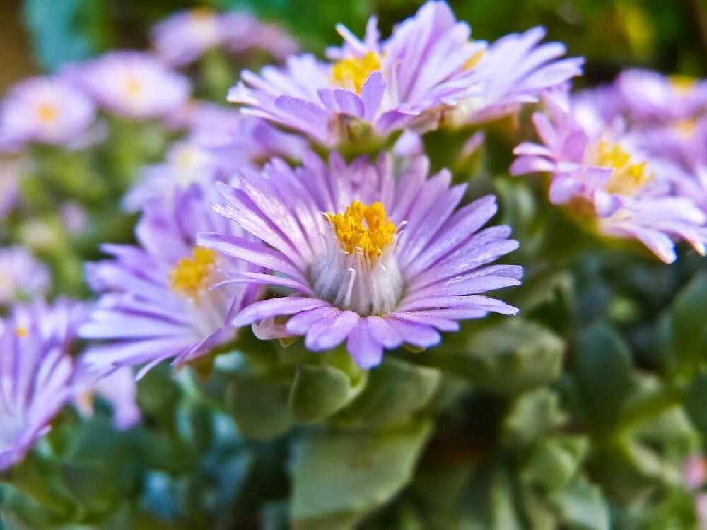 Little flowers by Soniris