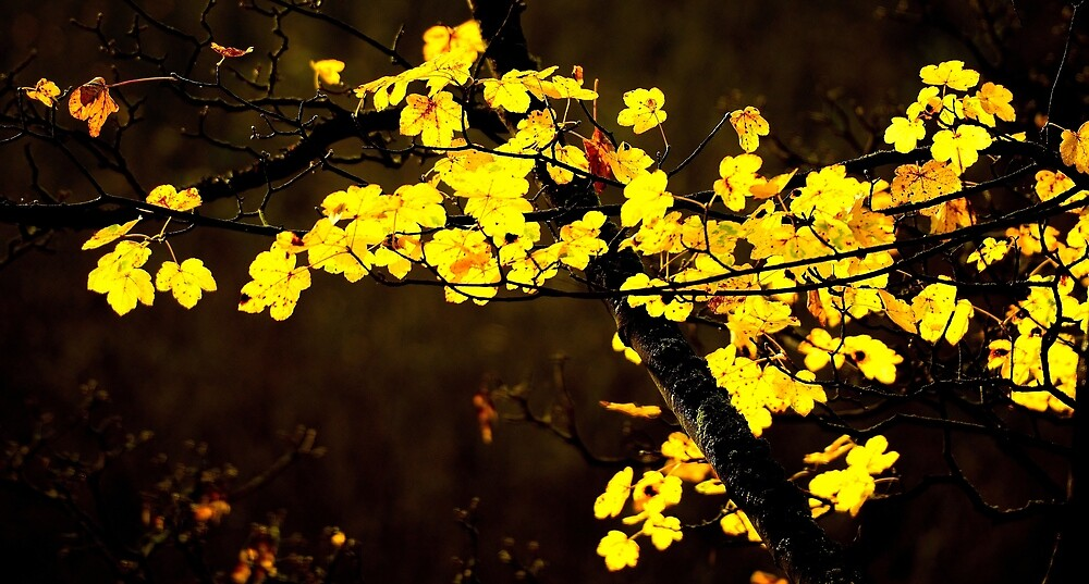 Autumns Light by Moments In Time Photography