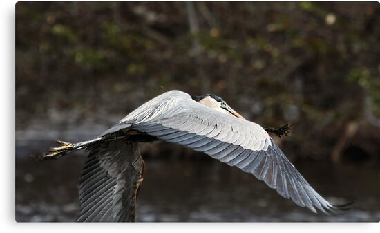 Sweeping Wings by Gail Falcon