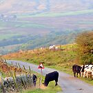 Roadside Grazing by mikebov