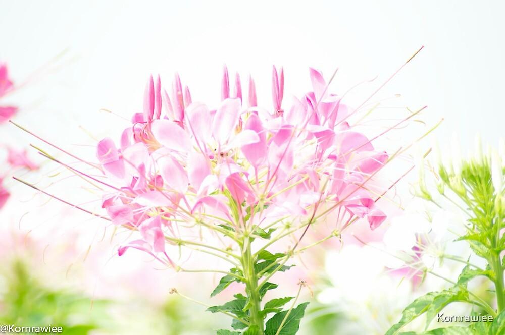 Happiness is...appreciate pastel flowers.. by Kornrawiee