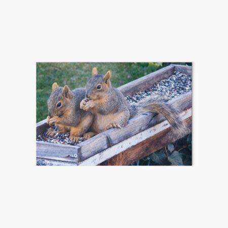 Squirrel Pair Art Board Print