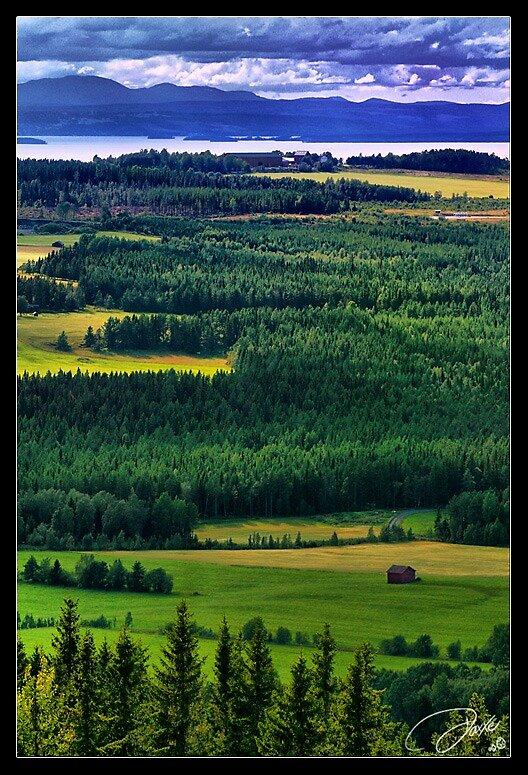 Tranquil Fields by Daniel G.