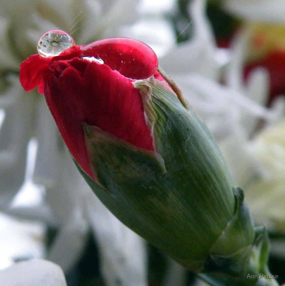 on a bud  by Ann Persse