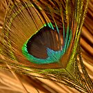 Peacock Feather by d1373l
