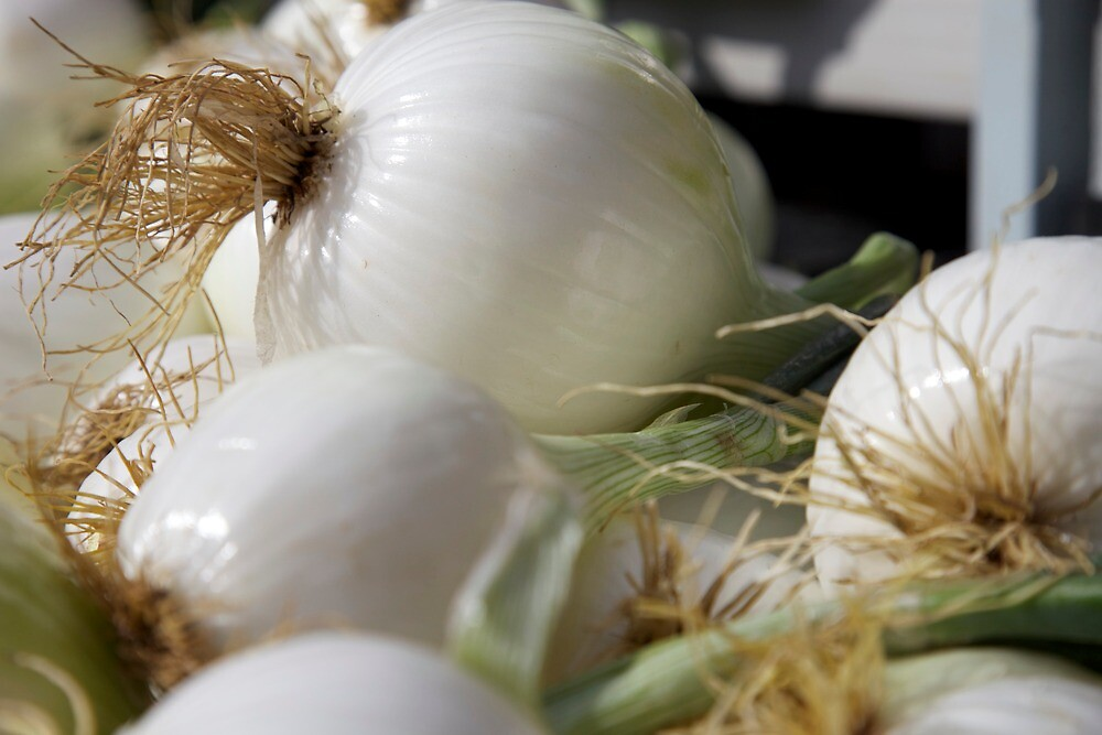 white onions by thvisions