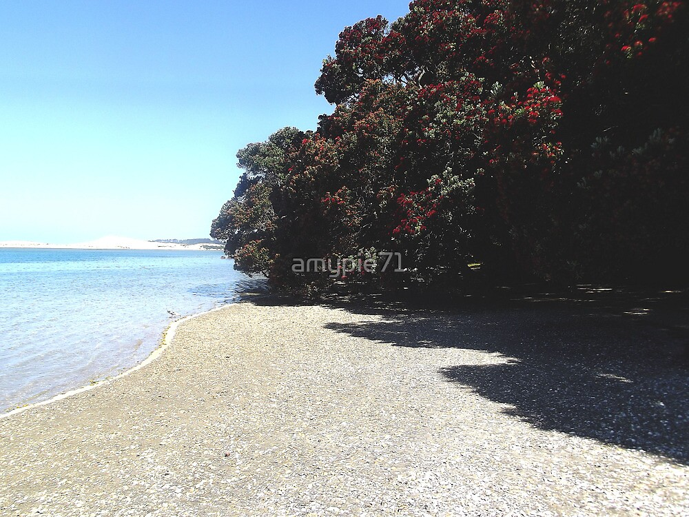 Pohutukawa trees line Mangawhai Estuary, New Zealand by amypie71