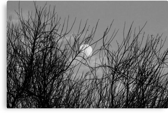 UNDER THE MOONLIGHT by HanselASolera