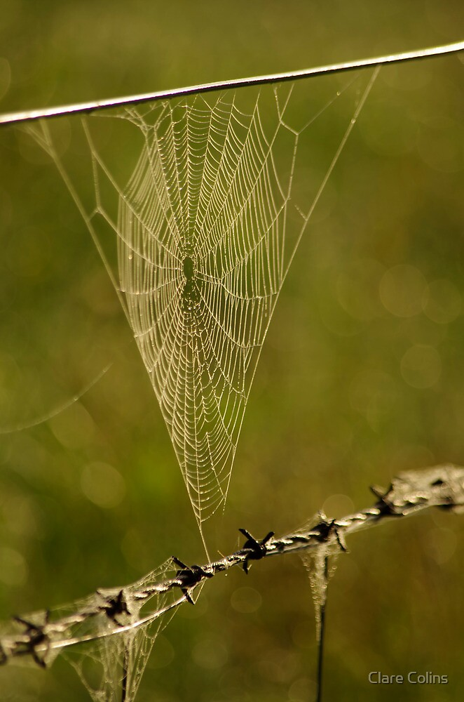 my heart in a cobweb by Clare Colins