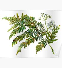 Watercolor fern and flowers Poster