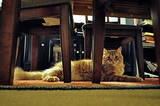 Resting Tabby Cat by emcreates