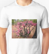 Impala Lily, Kruger National Park, South Africa Unisex T-Shirt