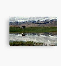 Tso Kar Lake, Ladakh Canvas Print