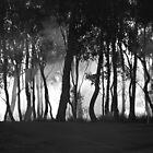 Foggy Sunrise by GandK