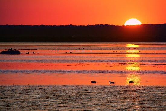 Birding til Sunset by Melissa Penta