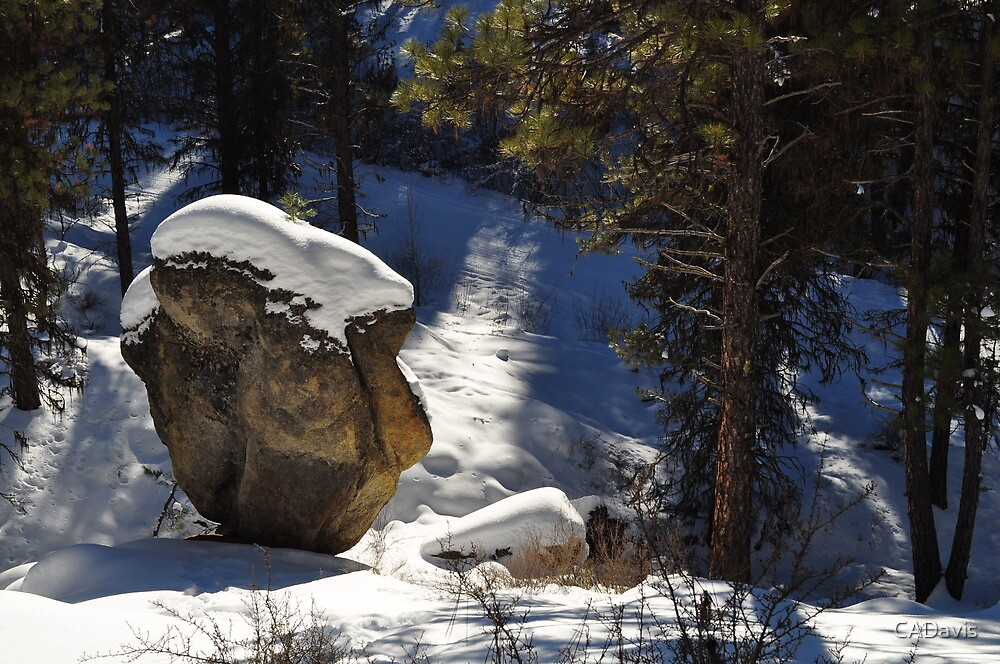 Profile In Stone by CADavis
