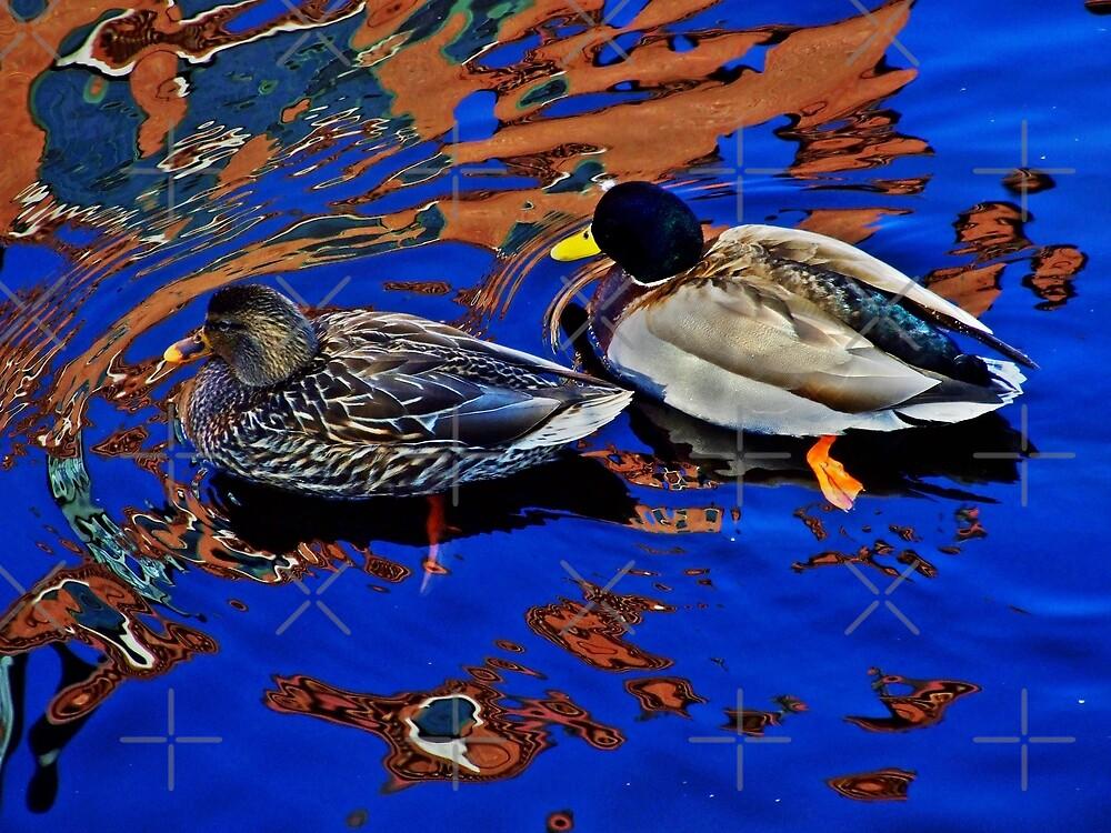 Two Ducks by BavosiPhotoArt
