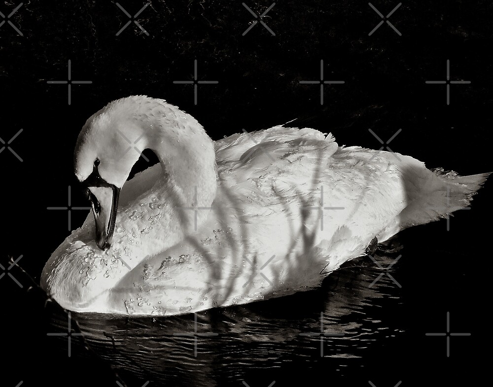 Swan In Black And White by BavosiPhotoArt