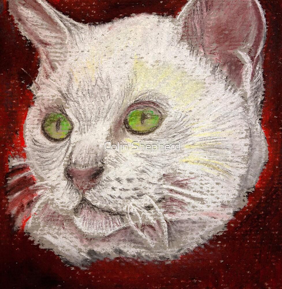 Phoenix - Burmese Kitten by Colin Shepherd