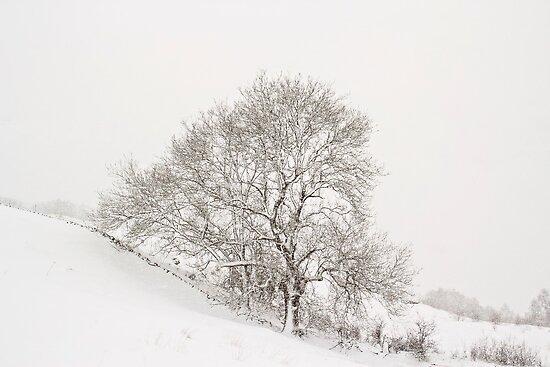 Snowy Tree by Lynne Morris