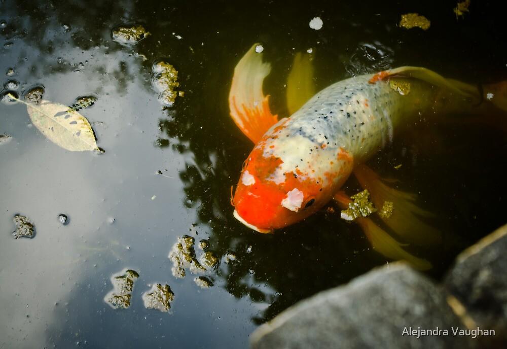 Koi Fish 2 by Alexandra Vaughan