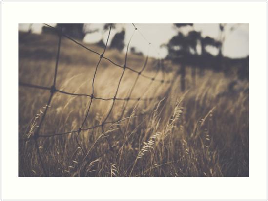 Along the ridge by Melissa Drummond