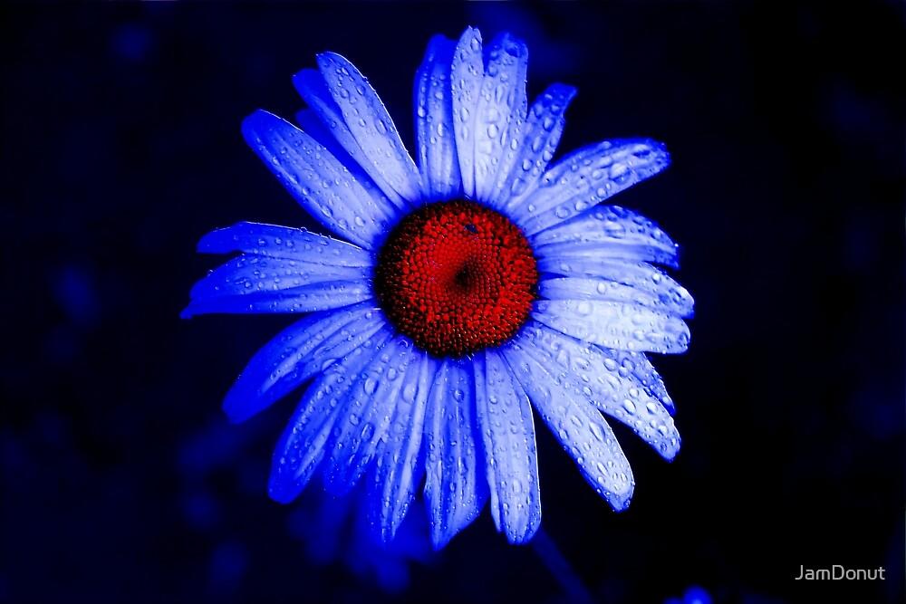 Daisy Blue  by JamDonut