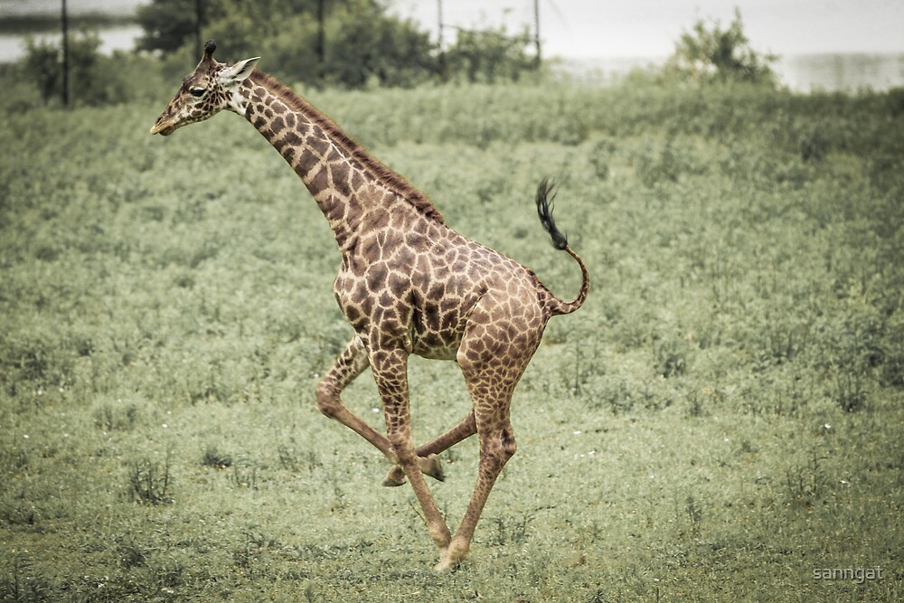 giraff by sanngat
