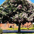 Cape Chestnut near Drouin Anglican Church by Bev Pascoe