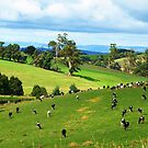 Dairy Cattle - Neerim South by Bev Pascoe