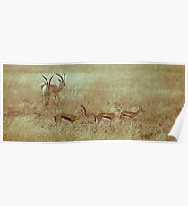 Antilopes in Serengeti National Park Poster