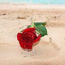 Sandy Rose by Ticker
