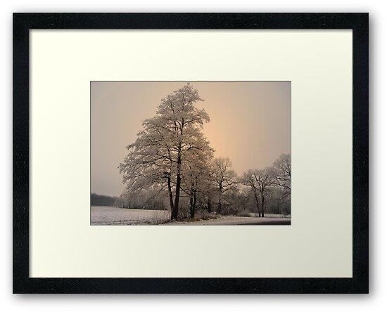 Trees in Winter Dress by ienemien