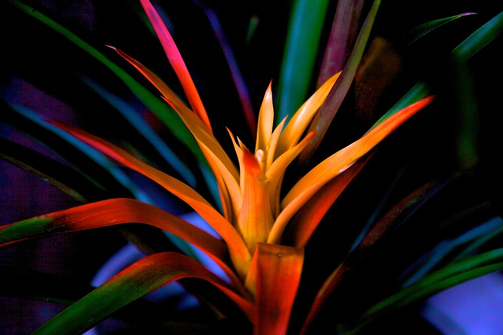bromeliad  by thvisions