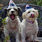 HO HUM AUSTRALIA DAY! by Helen Akerstrom Photography