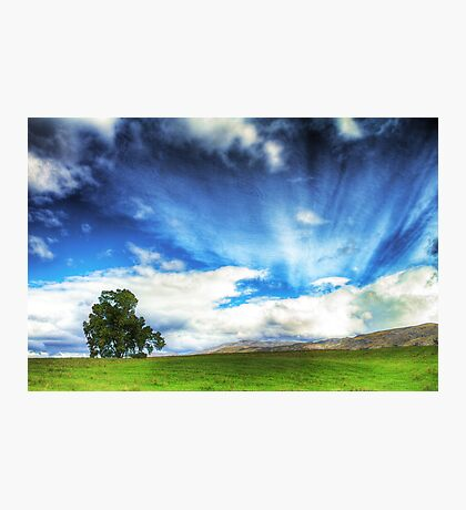 Country Meadow Photographic Print