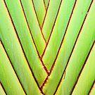 Symmetry in Nature by Ticker