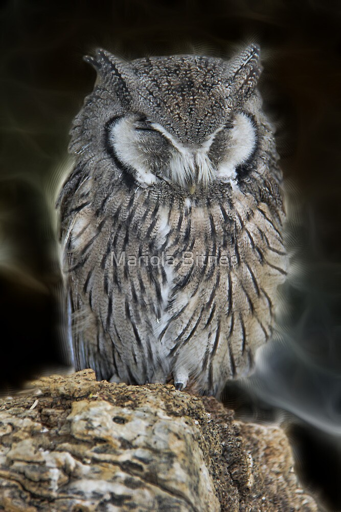 Sleeping Owl Beauty by Mariola Bitner