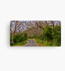 """On The Road To The Cape"" Canvas Print"
