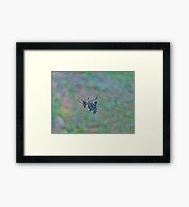 Spined Micrathena Orb Weaver Spider - Micrathena gracilis Framed Print