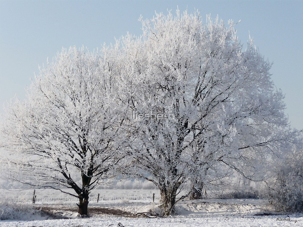 Frosted by liesbeth