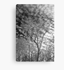 Trees with moon -  Ottawa National Wildlife Refuge Canvas Print
