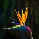 Bird of Paradise Flower (GO2) by Ray Warren