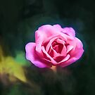 Pink Rose (GO2) by Ray Warren