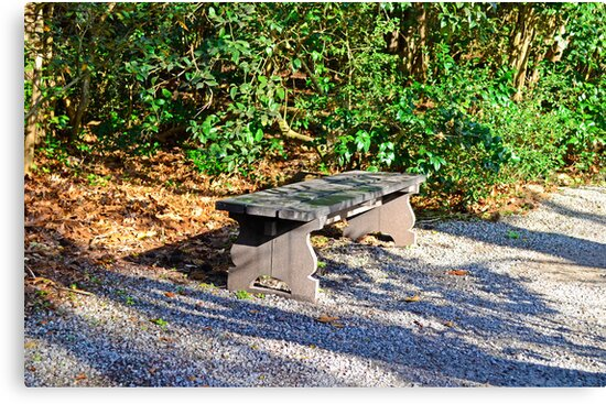 Bench In The Woods by TJ Baccari Photography