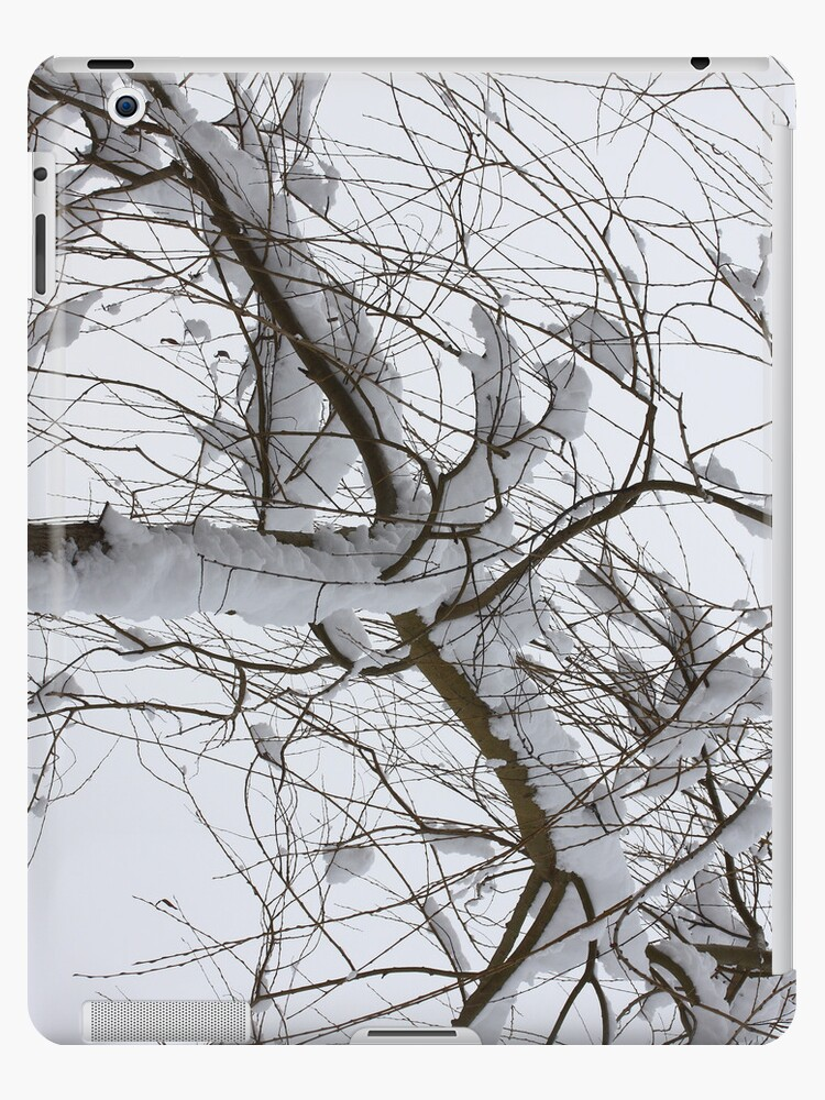 Willow in winter by Jicha