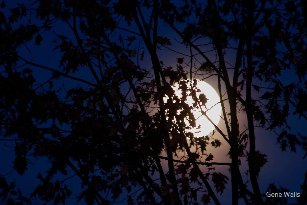 Fall Moonrise by Gene Walls